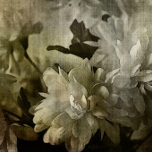 Art monochrome grunge floral watercolor paper textured backgroun — Stock Photo