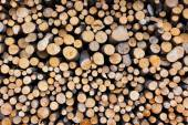 Firewood logs wood background — Stock Photo