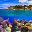Tropical island and fishes — Stock Photo #54338061