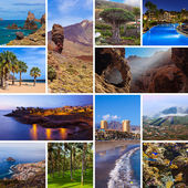 Collage of Tenerife Canary images — Stock Photo