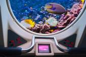 Fishes in submarine window — Stock Photo