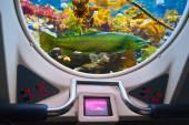 Fishes in submarine window — Stock Photo