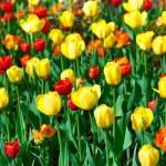 Цветы - природа фон — Стоковое фото #65398023