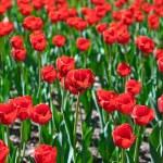 Цветы - природа фон — Стоковое фото #68439951