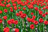 Flowers - nature background — Stock Photo