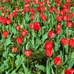 Flowers - nature background — Stockfoto #71066877