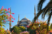 Blue mosque in Istanbul Turkey — Stock Photo