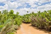 Mekong river between islands of its delta. — Stock Photo