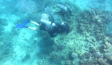 Scuba divers — Stock Video