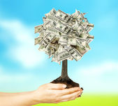 Money tree in hands — Stock Photo