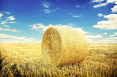 Hay-roll on meadow — Stock Photo