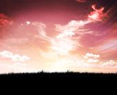 Sky and black field of grass — Foto de Stock