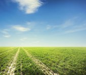 Beatiful morning field — Stock Photo