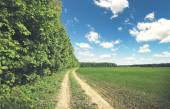 Field and forest with bright sun — Stock Photo