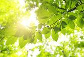 Liście zielone tło — Zdjęcie stockowe
