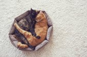 Cats sleeping and hugging — Stock Photo