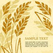 Ears of wheat background on grange — Stock Vector