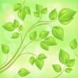 Spring branch with fresh leaves on green — Stock Vector #68130751
