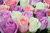 Pink and white roses background — Stock Photo