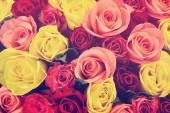 Colorful roses background, shallow depth of field — Stok fotoğraf