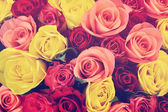 Colorful roses background, shallow depth of field — Stock Photo