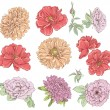 Set of vintage hand drawn flower. Vector illustration. Big selection of various flowers isolated on white background. — Stock Vector #62902593
