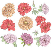 Set of vintage hand drawn flower. Vector illustration. Big selection of various flowers isolated on white background. — Vecteur