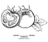 Vector hand drawing illustration of tomato isolated on white background. Collection of vegetables — Stock Vector