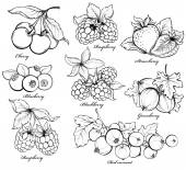 Collection of hand drawn berries isolated on white background. Strawberry, Cherry, Raspberry, Gooseberry, Blackberry, Red currant and Blueberry — Stock Vector