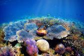 Podvodní korálový útes — Stock fotografie