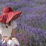 Woman in lavender field — Stock Photo #56378147