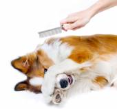 Funny dog showing fear of grooming — Foto Stock