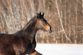 Horse in winter closeup — Stock Photo