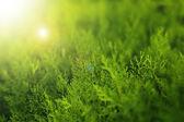 Light green background — Stock Photo