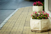 Flowerbed on pavement — Stock Photo