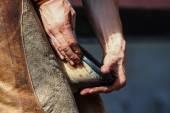 Farrier holds horse leg  — Stock Photo