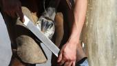 Equine farrier, fits a horse shoe to a horse's hoof with a rasp. — Stock Photo