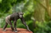 Chimpanzee walking — Stock Photo
