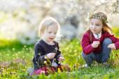 Little sisters in blooming garden — Stock Photo