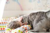 Little girl and cat — Stock Photo