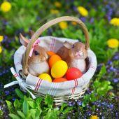 Coloridos huevos de pascua en la cesta — Foto de Stock