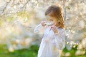 Little girl in blooming cherry garden — Foto de Stock