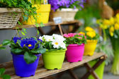 Colorful flowers on shop — Stock Photo
