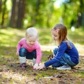 Little sisters gathering pine cones — Stock Photo