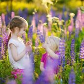 Little sisters in blooming lupine field — Stock Photo