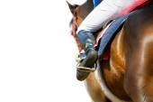 Running racing thoroughbred horse coming first isolated on white — Stock Photo