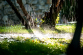 Water drops on the grass in sunset with long exposure — Stock Photo