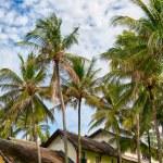 Palms and bungalows on Phuket — Stock Photo #62993201