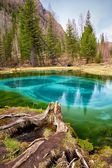 So cold blue geyser lake in Altay mountains — Stock Photo