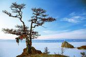 Shaman tree — Stock Photo